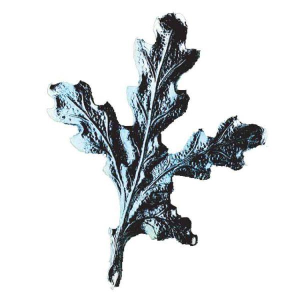 hrastov list za kljove